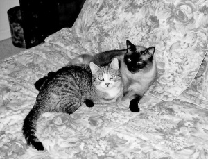 Angel (left) and Mese (right)