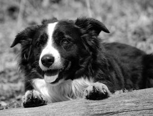 241-dog whisper